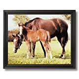 Horse Mare Colt Filly Kids Room Animal Home Decor Wall Picture Black Framed Art Print