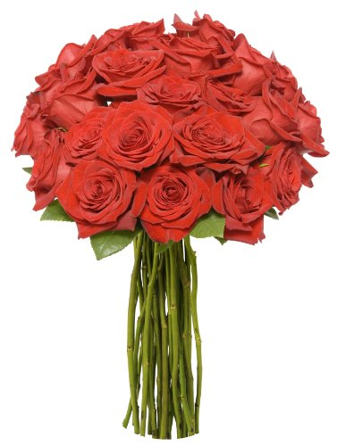 benchmark-bouquets-2-dozen-red-roses-no-vase