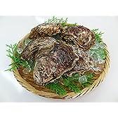 兵庫県 香住産 の 岩牡蠣 は夏限定 日本海の天然の味覚、 岩牡蠣 をどうぞ 11?12cm×10個 (2kg) [冷蔵][岩カキ10ヶ2kg]