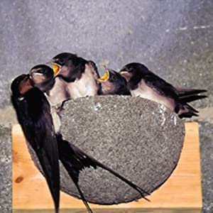 Swallow nesting box like we have at Fullers Hill Cottages