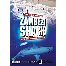 Zambezi Shark : Africa's Perfect Predator