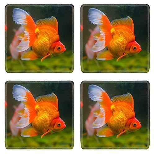 Luxlady Square Coasters IMAGE ID: 34805027 goldfish close up