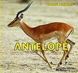 Antelope (Safari Animals (Paperback))