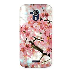 Special Cherry Blossoms Multicolor Back Case Cover for Micromax Canvas Magnus A117