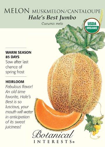 Hale's Best Jumbo Melon Seeds - 1 gram - Organic