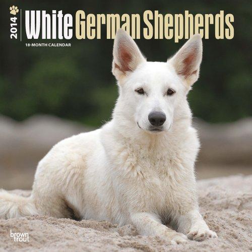 German Shepherds, White 2014 Square 12x12