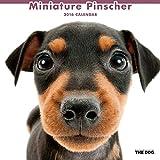 THE DOG 2016年カレンダー ミニチュア ピンシャー