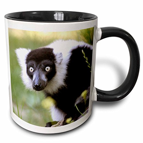 3dRose Danita Delimont - Lemurs - Lemur at the Sacramento Zoo, California - US05 TAU0066 - Tananarive Aubert - 11oz Two-Tone Black Mug (mug_88644_4)