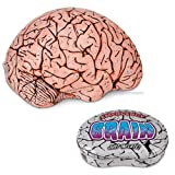 photo of brain