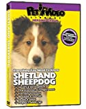 SHETLAND SHEEPDOG DVD! All about the Sheltie. Includes Bonus Video: Dog & Puppy Obedience Training.
