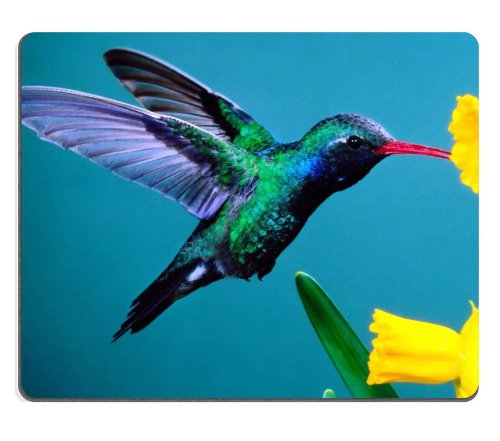 Hummingbird Beautiful Colors Plant Bird Flight Nectar Yellow Petals Mouse Pads Customized Made To Order Support Ready 9 7/8 Inch (250Mm) X 7 7/8 Inch (200Mm) X 1/16 Inch (2Mm) High Quality Eco Friendly Cloth With Neoprene Rubber Liil Mouse Pad Desktop Mou front-565619