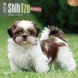 ブラウントラウト 2016年 カレンダー 壁掛け 犬 シーズー・パピー 16-ZB-50217