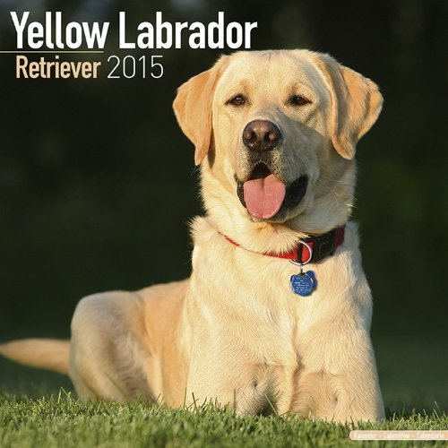 Labrador Retriever (Yellow) Calendar - Just Labrador Retriever (Yellow) Calendar - 2015 Wall calendars - Dog Calendars - Monthly Wall Calendar by Avonside
