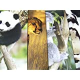 Staples Two Pocket Paper Folder ~ Set Of 4 Animal Folders (Panda Hanging Out, Prowling Cheetah, Koal