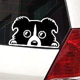 カーステッカー ボーダーコリー ドッグ 防水 シール 黒 銀 ステッカー 犬 シルバー 小
