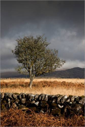 impresion-en-madera-20-x-30-cm-stone-fence-and-one-tree-under-a-dark-sky-de-john-short-getty-images