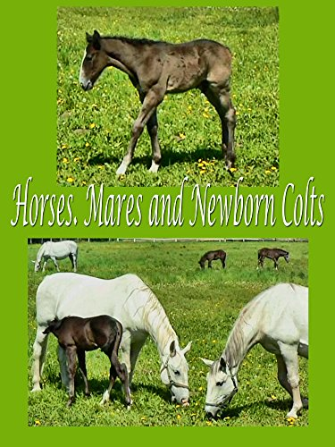 Horses. Mares and newborn colts on Amazon Prime Instant Video UK