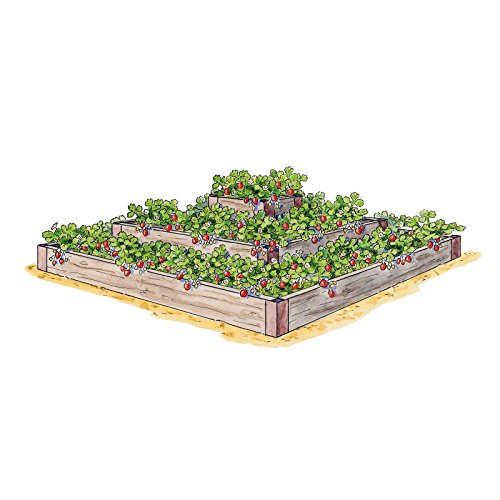 3 Tier Strawberry Planter: How To Grow Strawberries