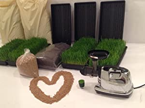 Organic Wheatgrass Growing Kit- Grow 6 Full Trays of Wheatgrass (Trays, Seed, Soil, Instructions) By: Rejuvenate Forever from Rejuvenate Forever LLC