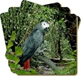 4x African Grey Parrot Picture Coasters Gift Set, Ref:AB-PA76C