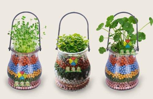Happy Life DIY Bonsai (Glass Bottle) Anion Carbon Ceramic Ball Plants/New Plants Ornaments