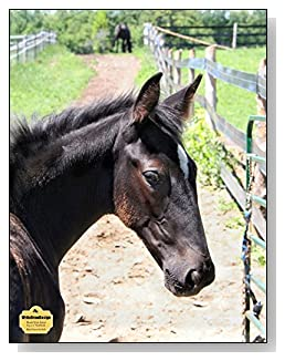 Black Horse On Path Notebook - For the horse-lover in your life! A black horse headed down a dusty path is the cover of this blank and wide ruled notebook with blank pages on the left and lined pages on the right.