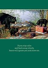 Tree-Free Greetings Bears Not Birthdays Birthday Cards 2 Card Set Multicolored 11309