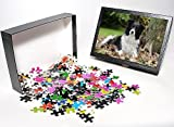 Photo Jigsaw Puzzle of JD-21342 DOG. Bor...