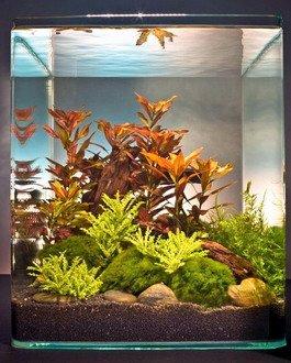 Dennerle-Ludwigia-Cube-30-Liter-Pflanzenlandschaft-fr-einen-30-Liter-Nano-Cube
