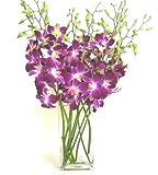 Fresh Flowers - Purple Dendrobium Orchids with Vase