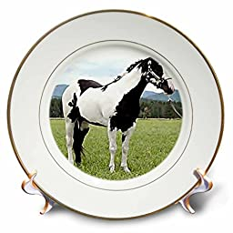 Horse - Paint Horse - 8 inch Porcelain Plate (cp_672_1)