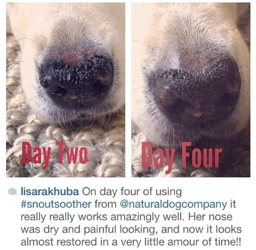 Chapped Dog Nose Home Remedy