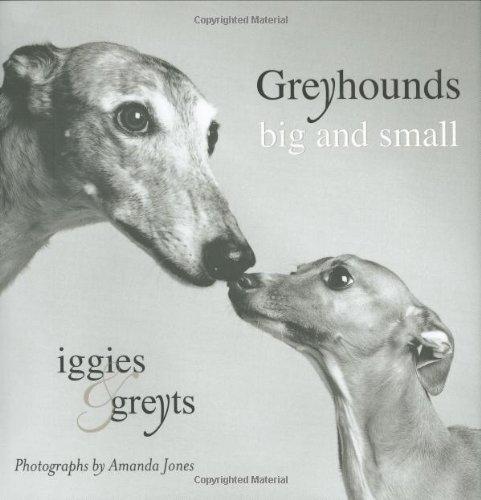 Greyhounds Big and Small: Iggies and Greyts