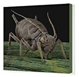 Canvas Print of LRDS-1 Black Aphid from Ardea Wildlife Pets