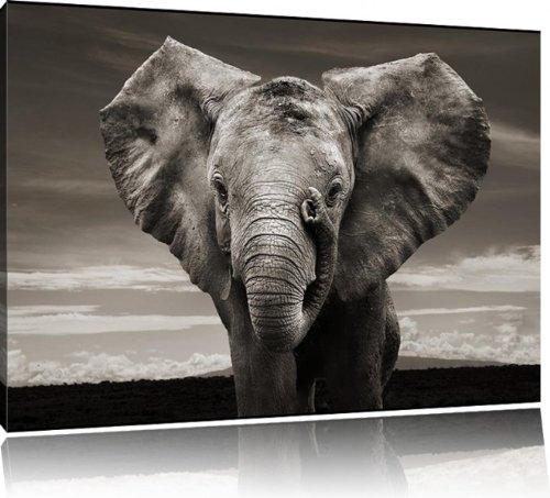 leinwand bilder elefant. Black Bedroom Furniture Sets. Home Design Ideas