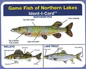 Game fish of northern lakes ident i card for Freshwater fishing games