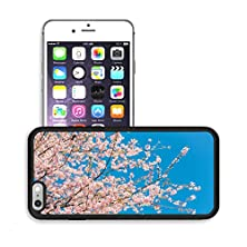 buy Luxlady Premium Apple Iphone 6 Plus Iphone 6S Plus Aluminum Backplate Bumper Snap Case Image Id 31503396 Pink Sakura Blooming In The Sunshine And Blue Sky Chiang Mai Thailand