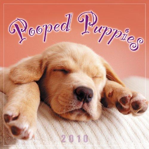 Pooped Puppies 2010 Mini Wall Calendar (Calendar)