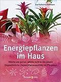 Energiepflanzen im Haus: Welche uns gut tun, welche nicht zu uns passen - Ungewöhnliche Zimmerpflanzenporträts mit Pflegetips title=
