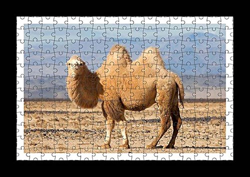 Puzzle Style (Pre-assembled) Wall Print of Bactrian Camel by Lisa Loft