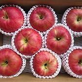 【果樹園より直販】りんご「陽光」特秀品 大玉9個入り3㎏ 福島県須賀川産