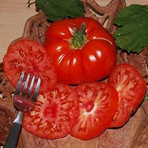 lawn garden outdoor gardening lawn care plants seeds bulbs vegetablesHeirloom Beefsteak Tomato