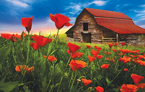 SunsOut Barn in Poppies Jigsaw Puzzle (550-Piece)