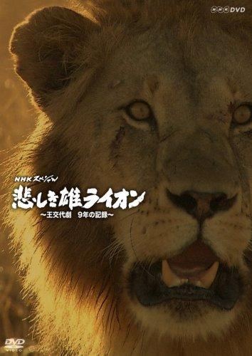 NHKスペシャル 悲しき雄ライオン~王交代劇 9年の記録~ [DVD]