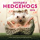 img - for Adorable Hedgehogs 2016: 16-Month Calendar September 2015 through December 2016 book / textbook / text book