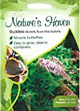 Unwins Natures Haven Buddleia 'Butterfly Bush' Miss Butterfly