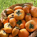 贈答用・和歌山の平たねなし柿(平核無柿)3.5~4.0kg(15個~18個) ランキングお取り寄せ