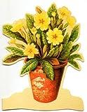 mamelok  グリーティングカード 封筒付 イングランド  フラワー 植木鉢