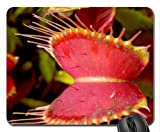 PLANTA CARNIVORA Mouse Pad, Mousepad (Flowers Mouse Pad)
