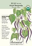 Bean Bush Royal Burgundy Certified Organic Seed, Appliances for Home
